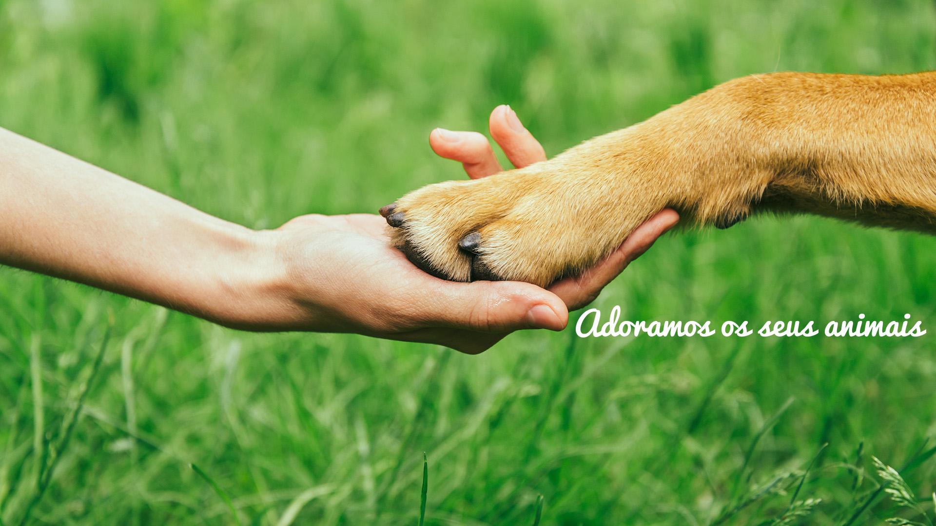 adoramos-seus-animais-01